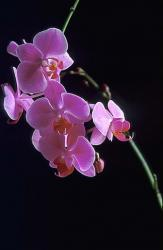 Purple orchids photo.jpg