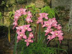 pink orchid in nature picture.jpg