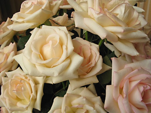 picture of roses in cream and light pink colors.jpg