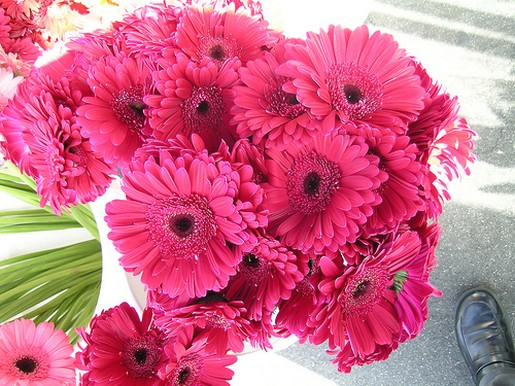 Bright Pink Daisy Flowers Wedding Bouquet
