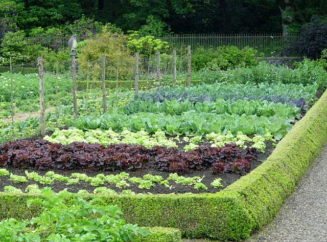 Veggies garden with different kind of lettuces and all kind of cabbages.PNG