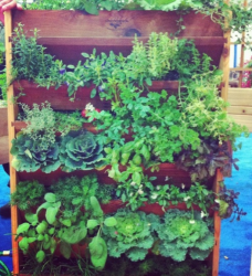 Vertical vegetable garden with all kind of vegebles and herbs.PNG