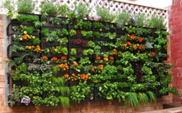 Great urban vegetable garden_pallet potting vegetables garden growing on walls.PNG