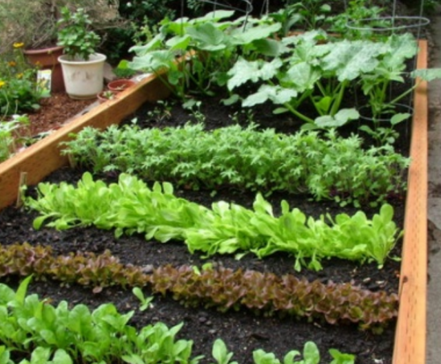 Great Vegetable Garden Ideas Pictures Png