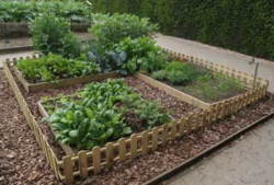 Great vegetable garden plans pictures.PNG