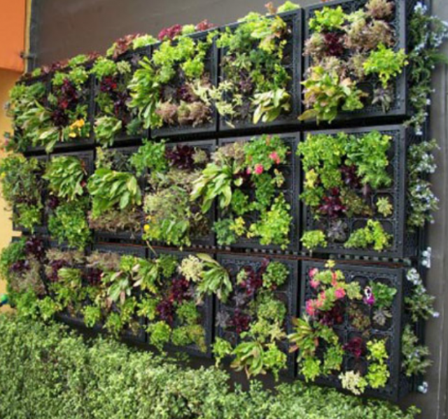 Hanging garden with lettuces and flowers.PNG