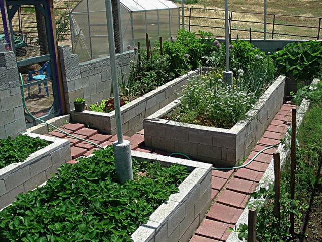 Herb garden ideas growing on crete raised bedsPNG