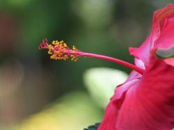 picture of bright hibiscus flower