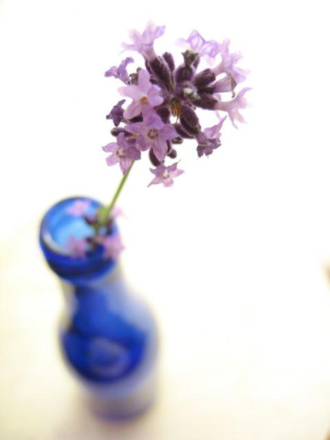 Lavender in blue vase.jpg