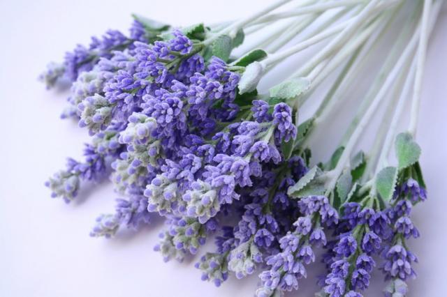 Fresh Flowers Lavender