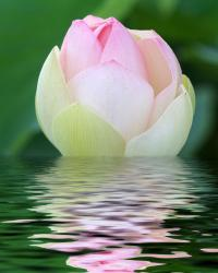beautiful light pink on water.jpg