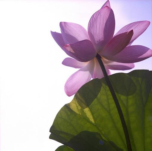 flower in pink, Beautiful flower