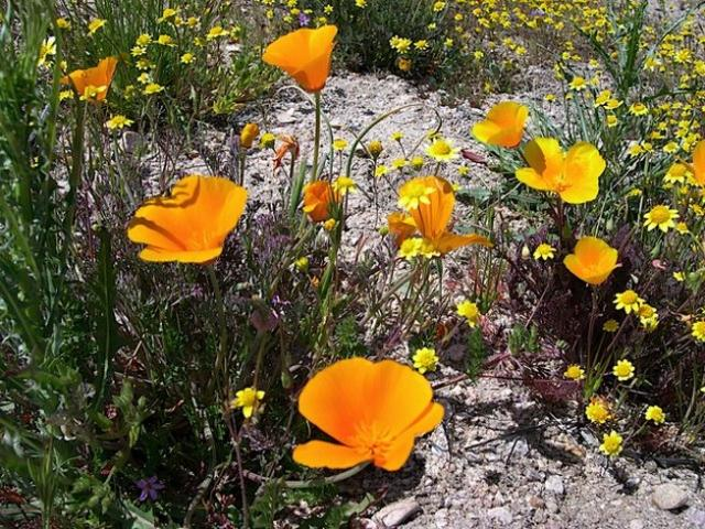 bright colorful wildflowers.jpg