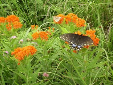 El Dorado State Park wildflower with butterfly.jpg
