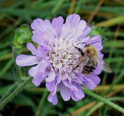 Native perennials with bee.jpg