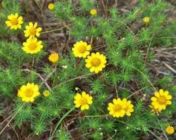 picture of bright yellow wildflower.jpg