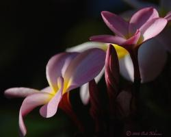 pink and yellow tropical flowers.jpg