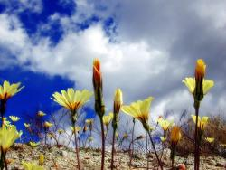 yellow wildflowers photos.jpg