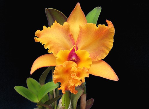 tropical flowers gallery  photos, Beautiful flower