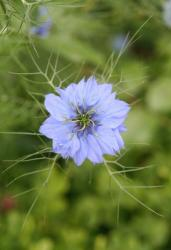 blue exotic flower picture.jpg