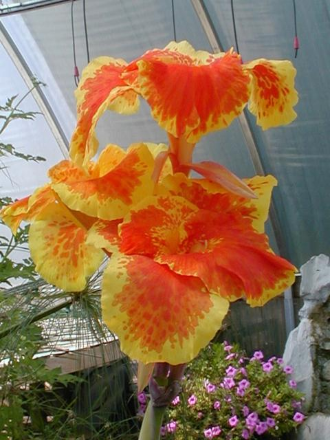 colorful exotic flower pics.jpg