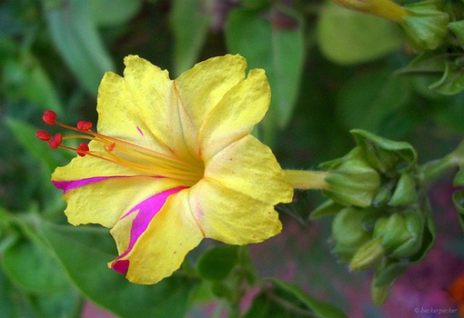 exotic flower in colorful colors  comments, Beautiful flower