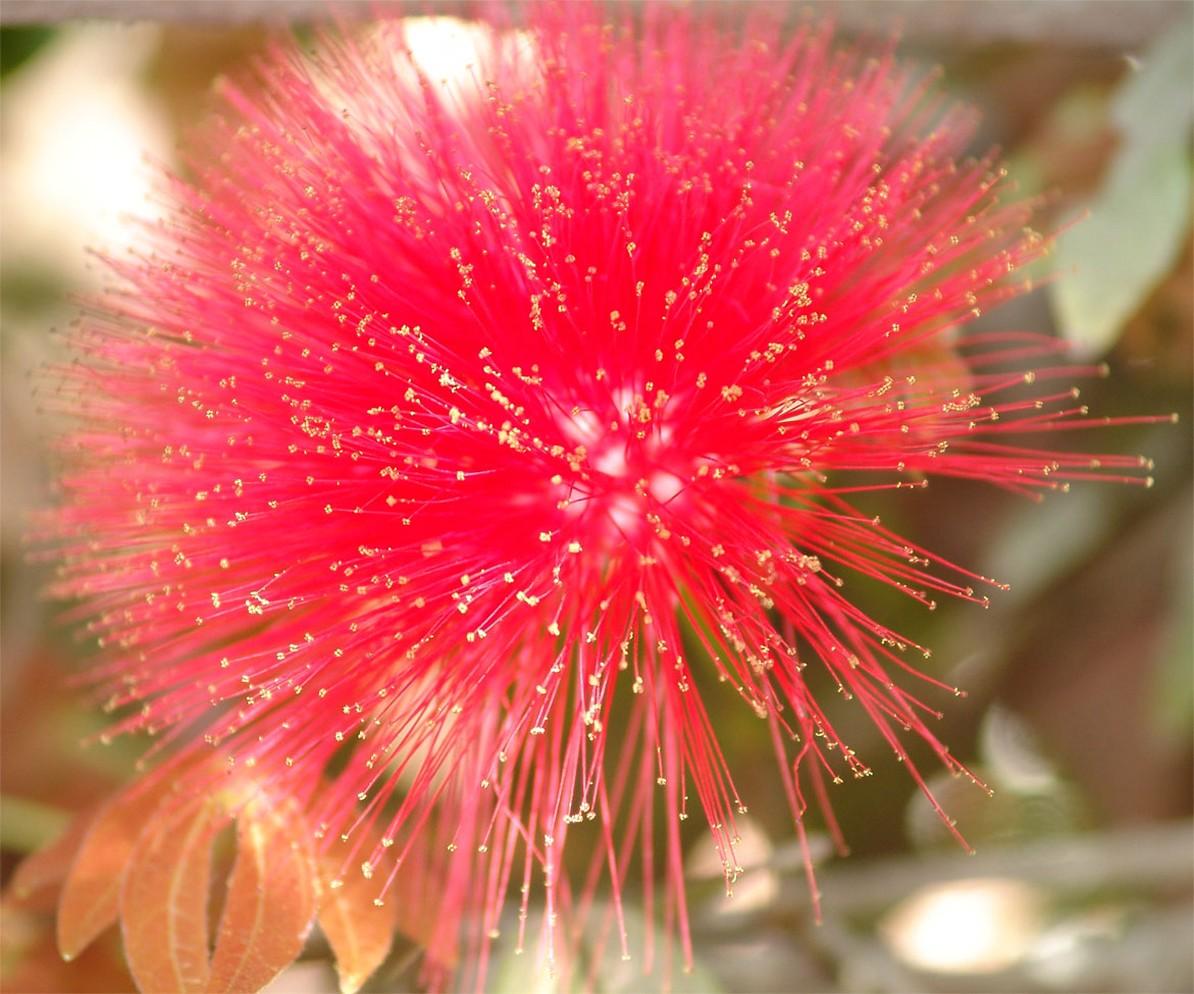 http://flowerpicturegallery.com/d/6577-1/exotic+flower+in+red+flower.jpg