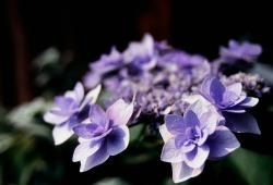 exotic purple flower gallary.jpg