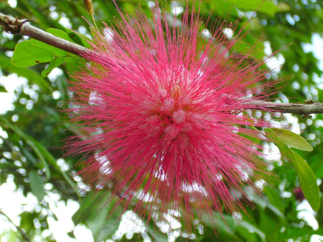 http://flowerpicturegallery.com/d/6617-1/Hot+pink+exotic+flower.jpg