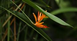 orange bird flower photo.jpg