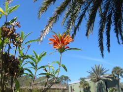 orange exotic flower photo.jpg