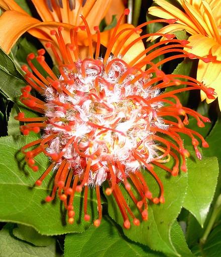 Orange Exotic Flower Picture
