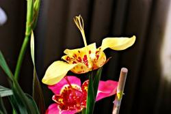 picture of exotic flowers in yellow and pink.jpg