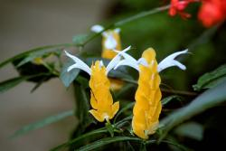 picture of Yellow exotic flowers.jpg