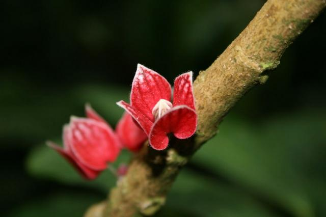 red exotic flower on tree.jpg