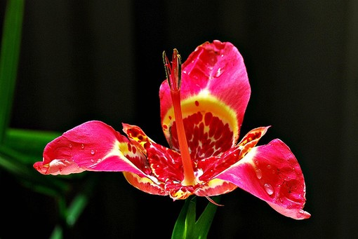 red exotic flower photo  comment, Beautiful flower