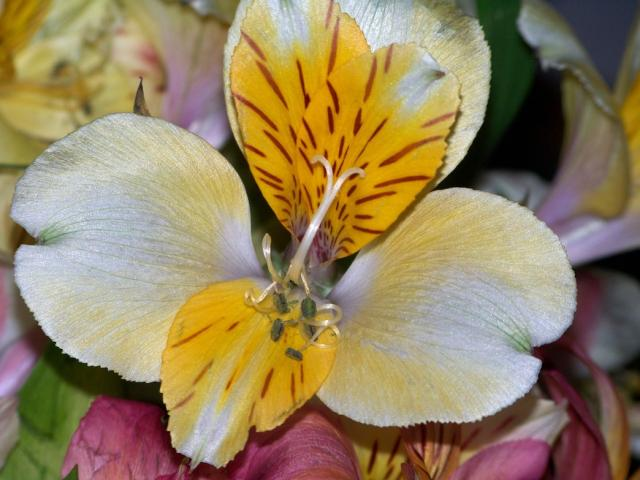 yellow exotic flower pic hires p hd, Natural flower