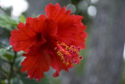 bright red annual flower.jpg