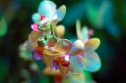 ethereal orchids with unique colors.jpg