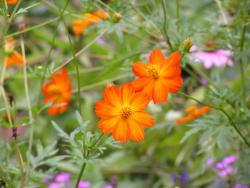 fall annual flowers in rich orange.jpg