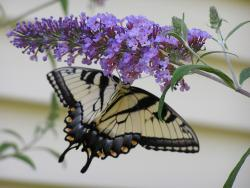 Summer annual flowers in purple with a beautiful butterfly.jpg