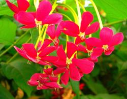 summer annual flowers in red with bright green leaves.jpg