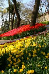 winter annual flowers in red and yellow.jpg