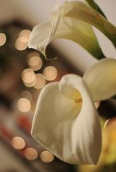 Bouquet calla lily flower.jpg