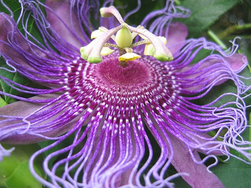 tropical purple flower.jpg