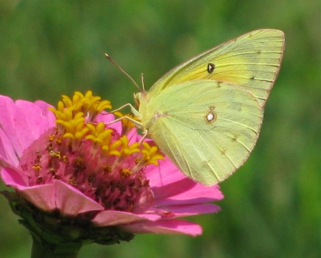 annual flowers photo with butterfly.jpg