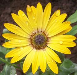 beautiful bright yellow flowers for your garden.jpg