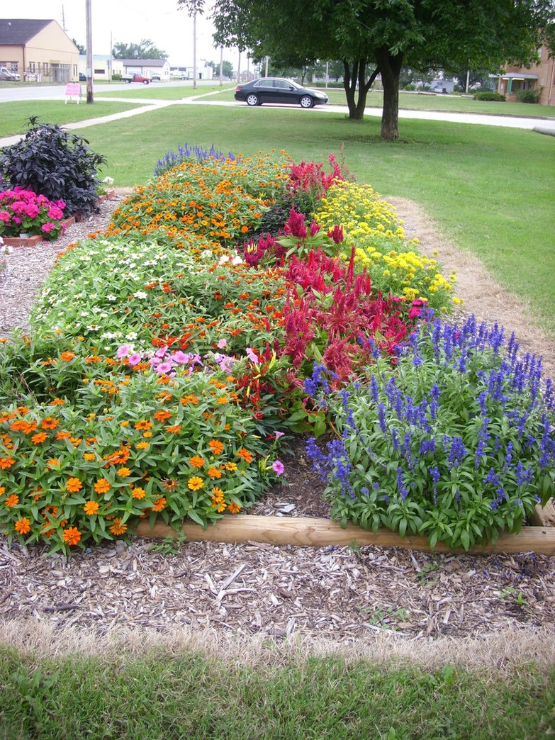 beautiful garden photo with bright colored annual flowers.jpg
