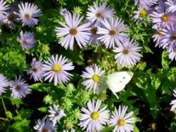 beautiful garden flowers and butterfly.jpg