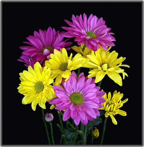 purple and daisies and bright yellow daisies  comment, Beautiful flower